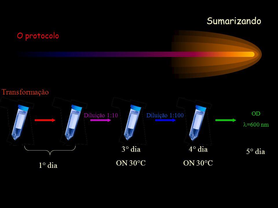 Sumarizando O protocolo Transformação 1° dia 3° dia ON 30°C 4° dia