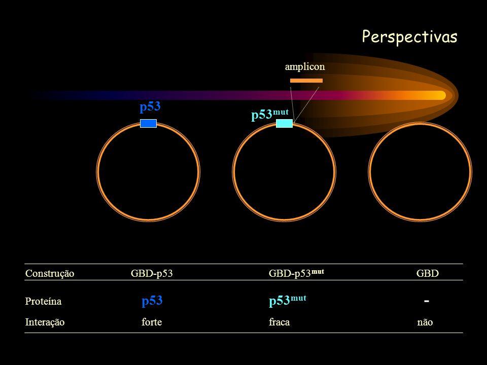 Perspectivas p53 p53mut amplicon Construção GBD-p53 GBD-p53mut GBD