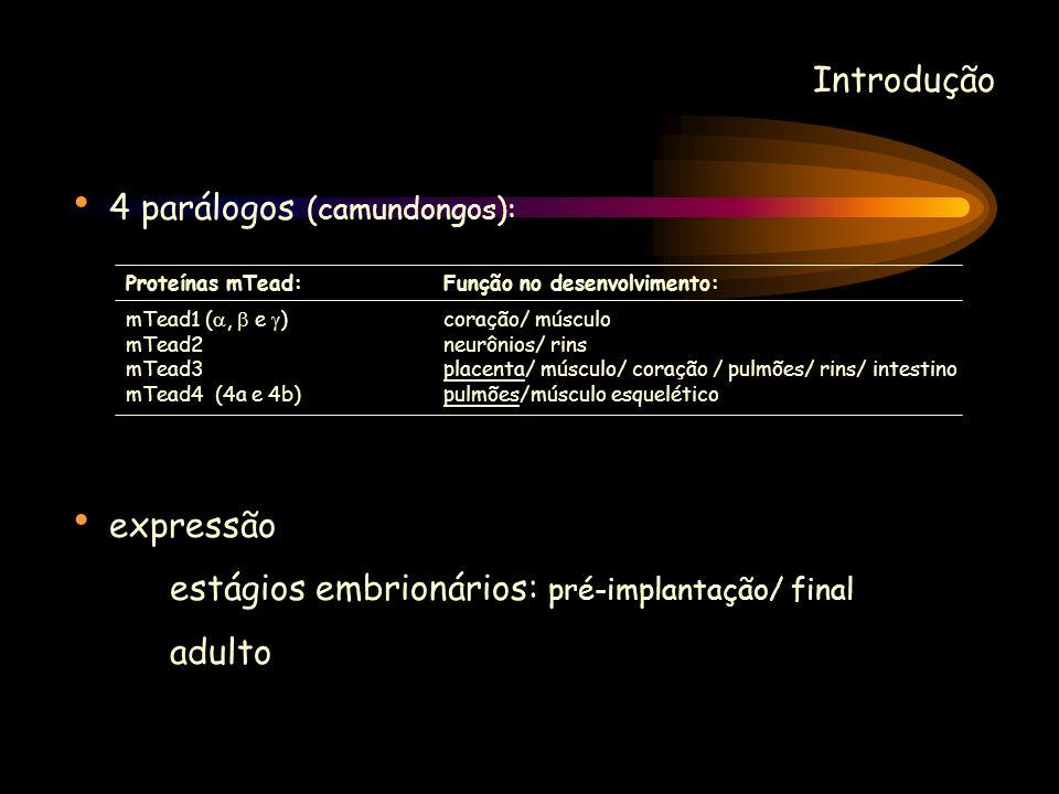 4 parálogos (camundongos):