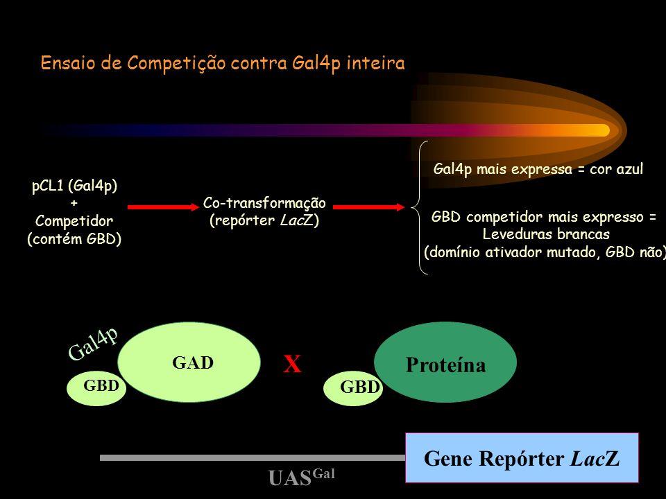 X Gal4p Proteína Gene Repórter LacZ UASGal