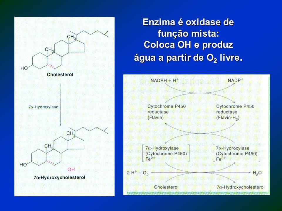 Enzima é oxidase de função mista: