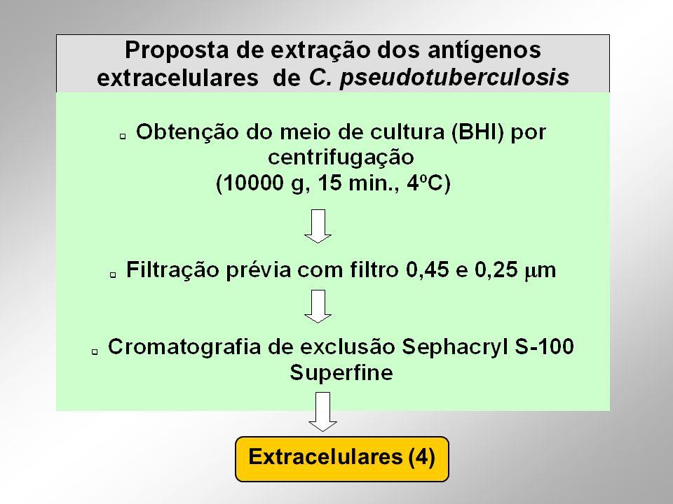 Extracelulares (4)