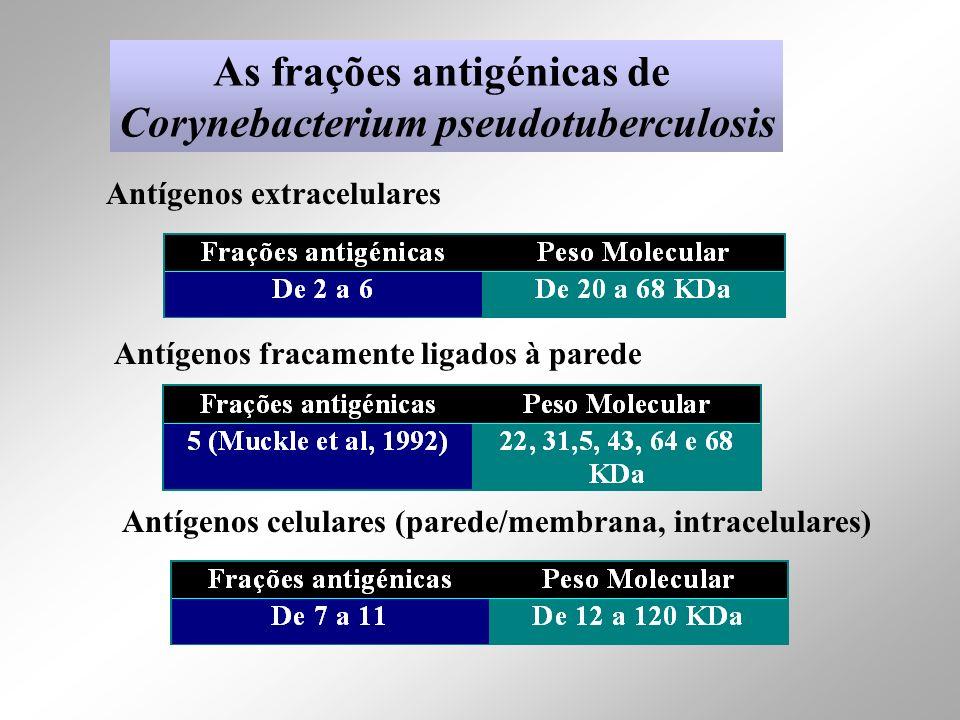As frações antigénicas de Corynebacterium pseudotuberculosis