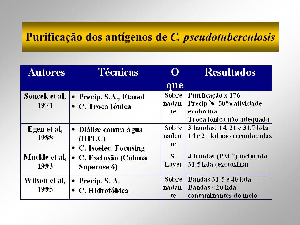 Purificação dos antígenos de C. pseudotuberculosis