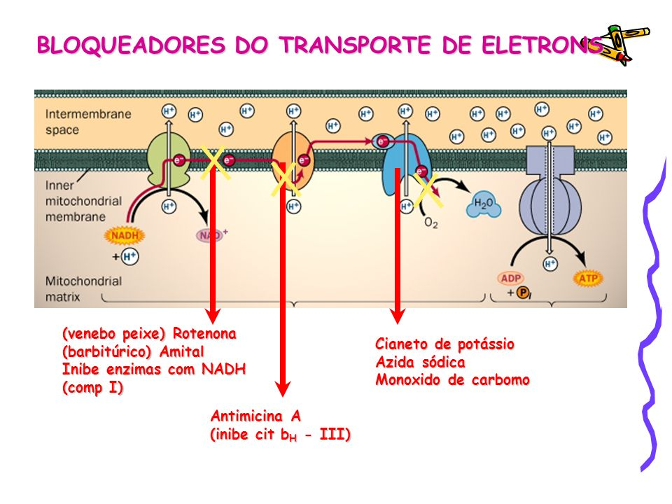 BLOQUEADORES DO TRANSPORTE DE ELETRONS