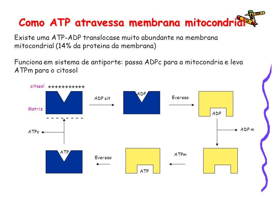 Como ATP atravessa membrana mitocondrial
