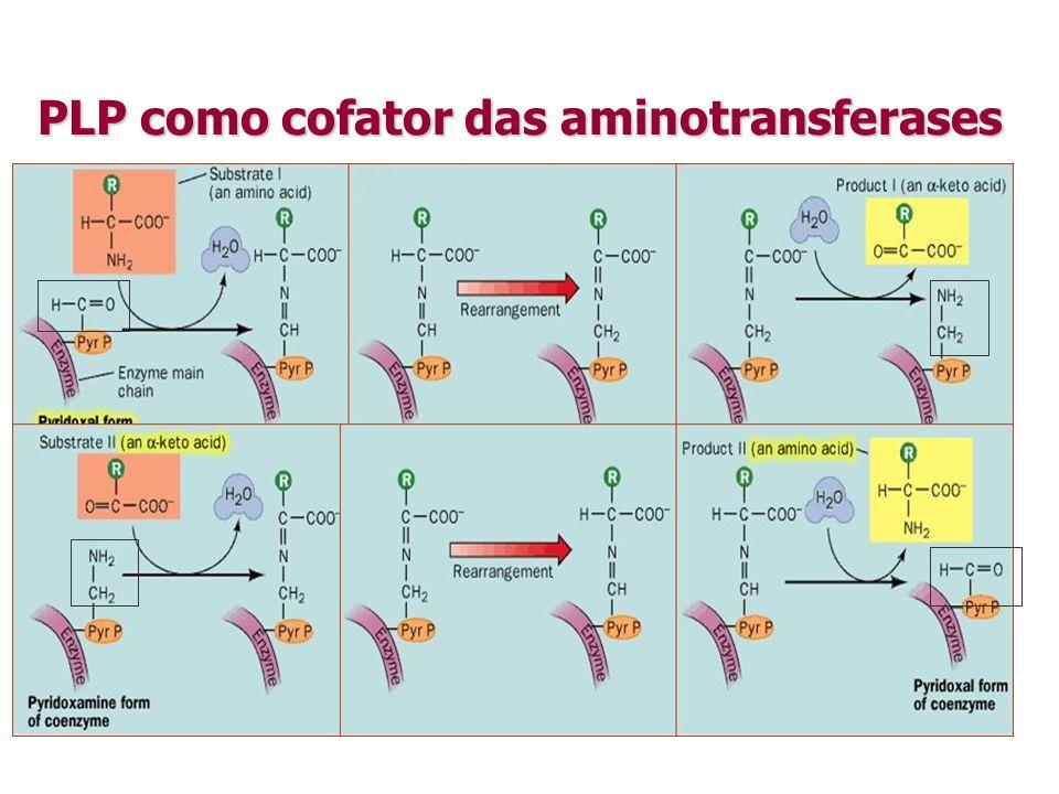 PLP como cofator das aminotransferases