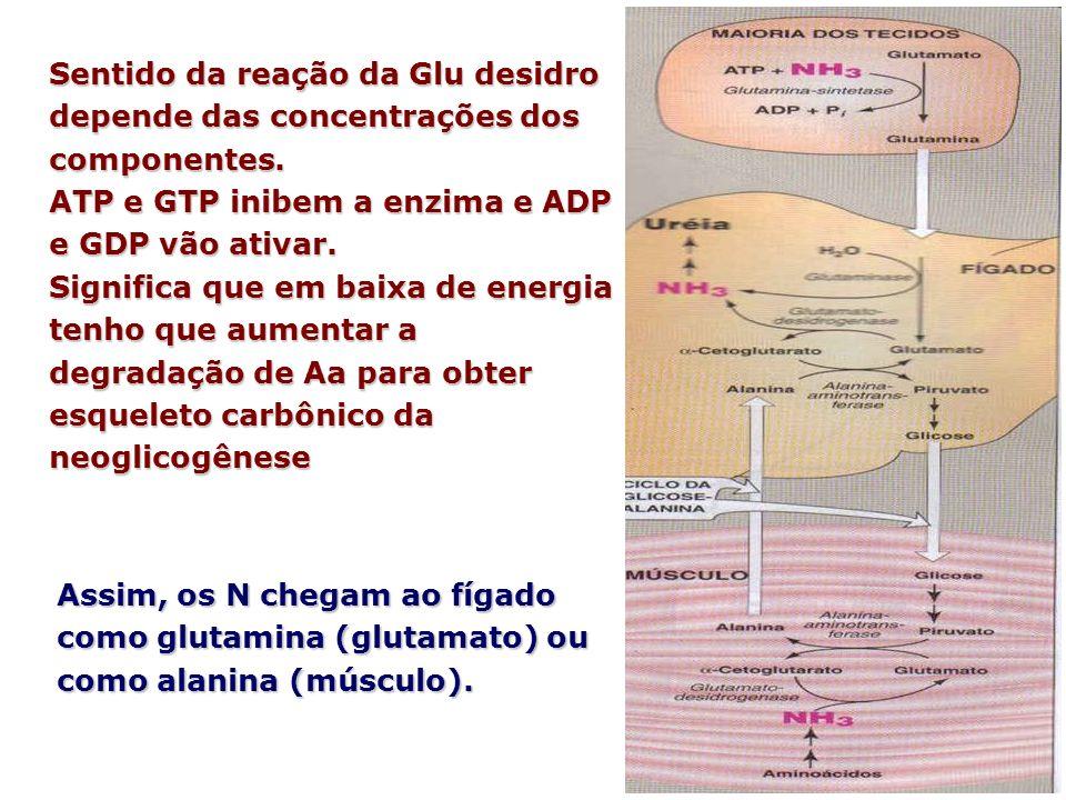 Sentido da reação da Glu desidro depende das concentrações dos componentes.