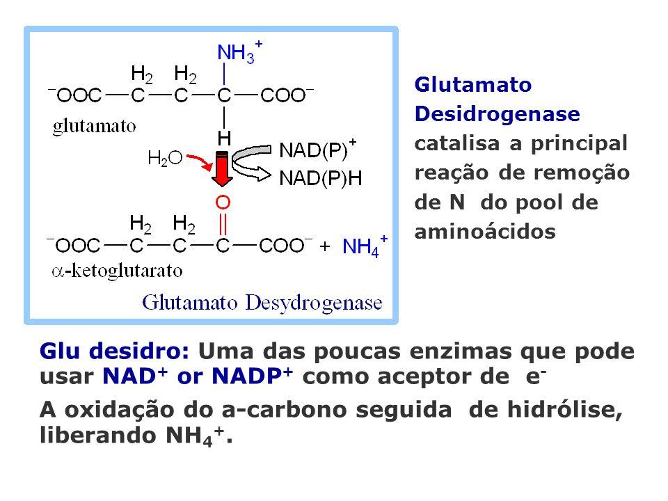 A oxidação do a-carbono seguida de hidrólise, liberando NH4+.