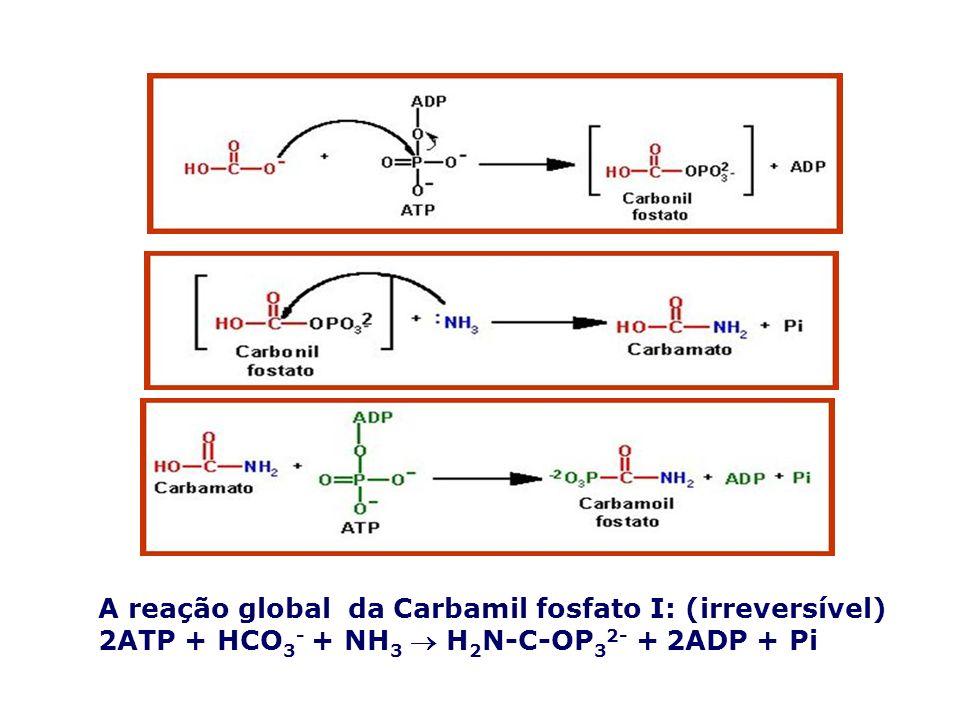 A reação global da Carbamil fosfato I: (irreversível)