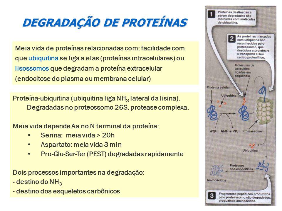 DEGRADAÇÃO DE PROTEÍNAS