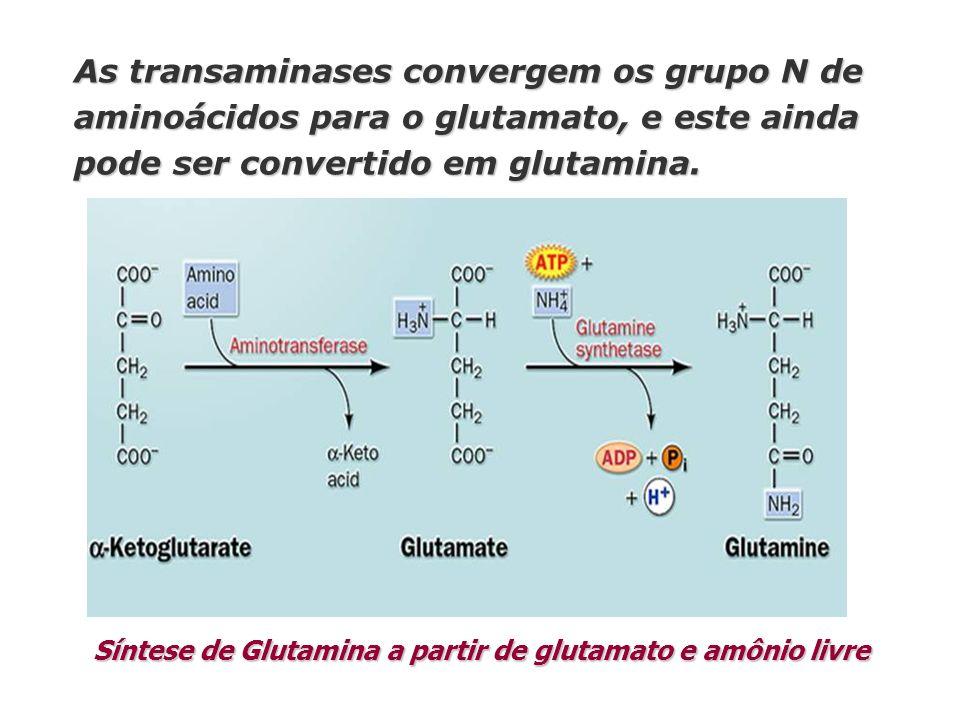 Síntese de Glutamina a partir de glutamato e amônio livre