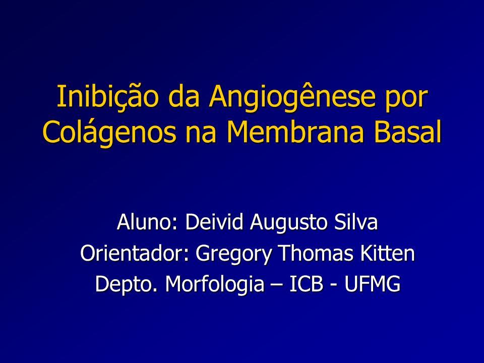 Inibição da Angiogênese por Colágenos na Membrana Basal