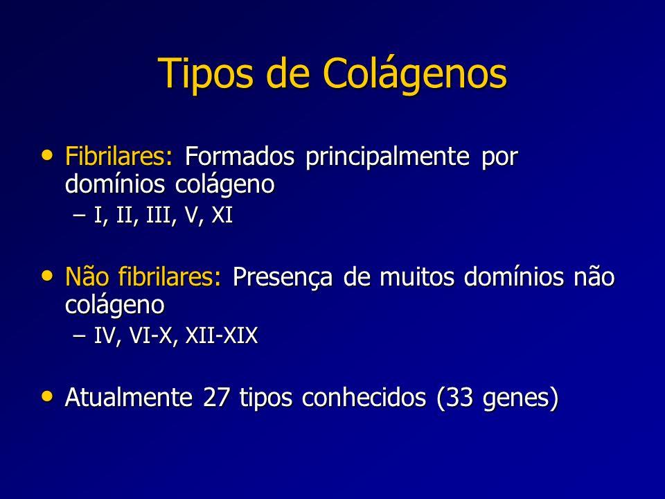 Tipos de Colágenos Fibrilares: Formados principalmente por domínios colágeno. I, II, III, V, XI.