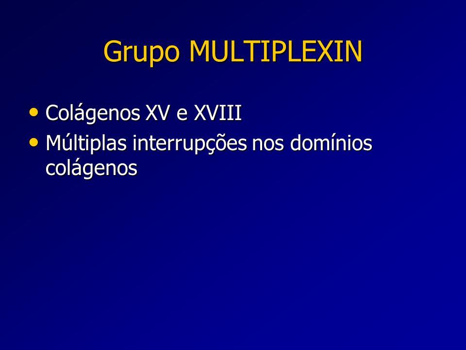 Grupo MULTIPLEXIN Colágenos XV e XVIII