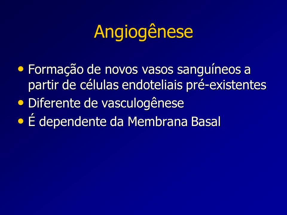 Angiogênese Formação de novos vasos sanguíneos a partir de células endoteliais pré-existentes. Diferente de vasculogênese.