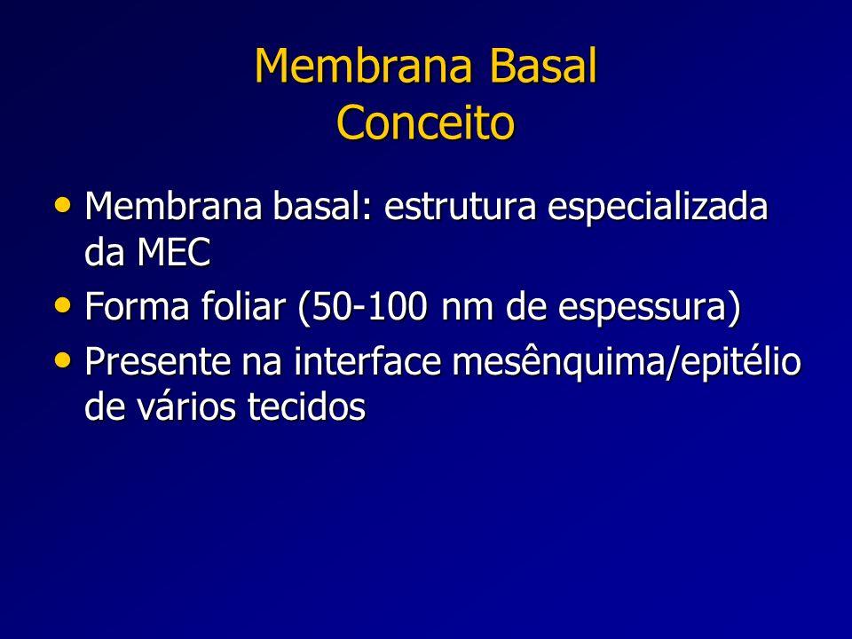 Membrana Basal Conceito