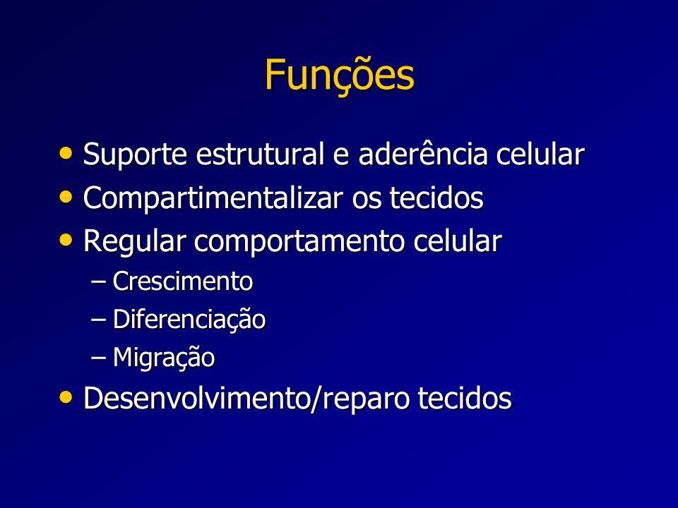 Funções Suporte estrutural e aderência celular