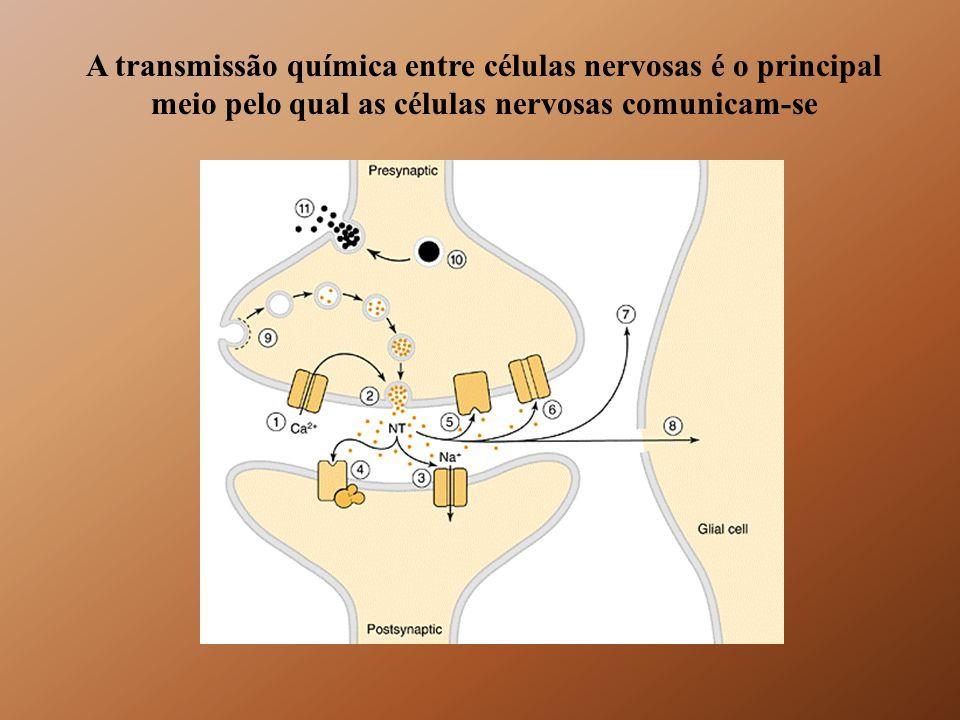 A transmissão química entre células nervosas é o principal meio pelo qual as células nervosas comunicam-se