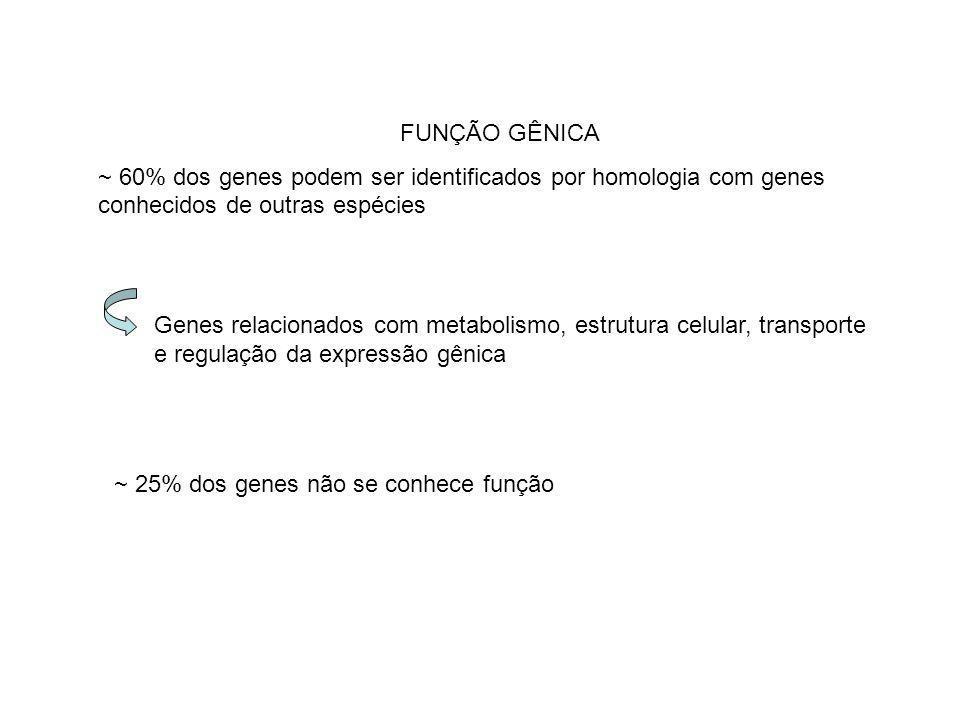 FUNÇÃO GÊNICA ~ 60% dos genes podem ser identificados por homologia com genes conhecidos de outras espécies.