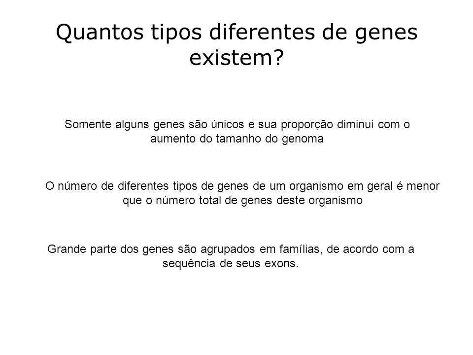 Quantos tipos diferentes de genes existem