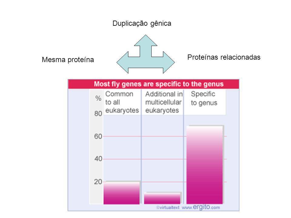 Duplicação gênica Proteínas relacionadas Mesma proteína
