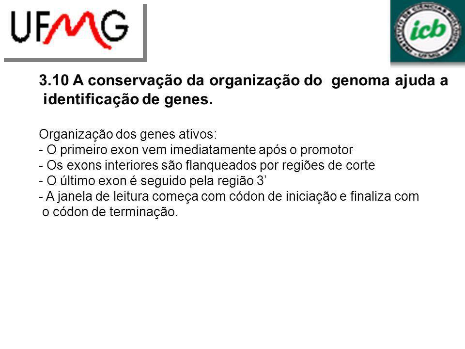 LGCM URLGA 3.10 A conservação da organização do genoma ajuda a