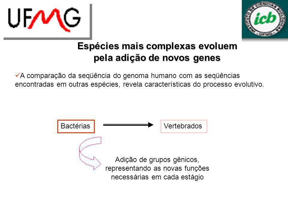 Espécies mais complexas evoluem pela adição de novos genes