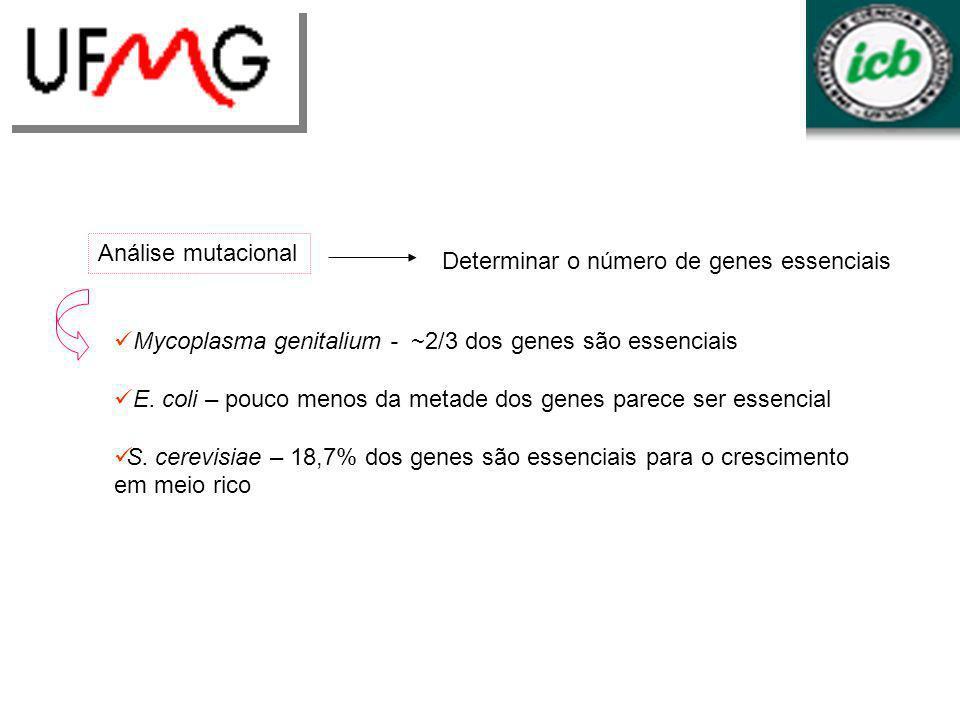 Análise mutacionalDeterminar o número de genes essenciais. Mycoplasma genitalium - ~2/3 dos genes são essenciais.