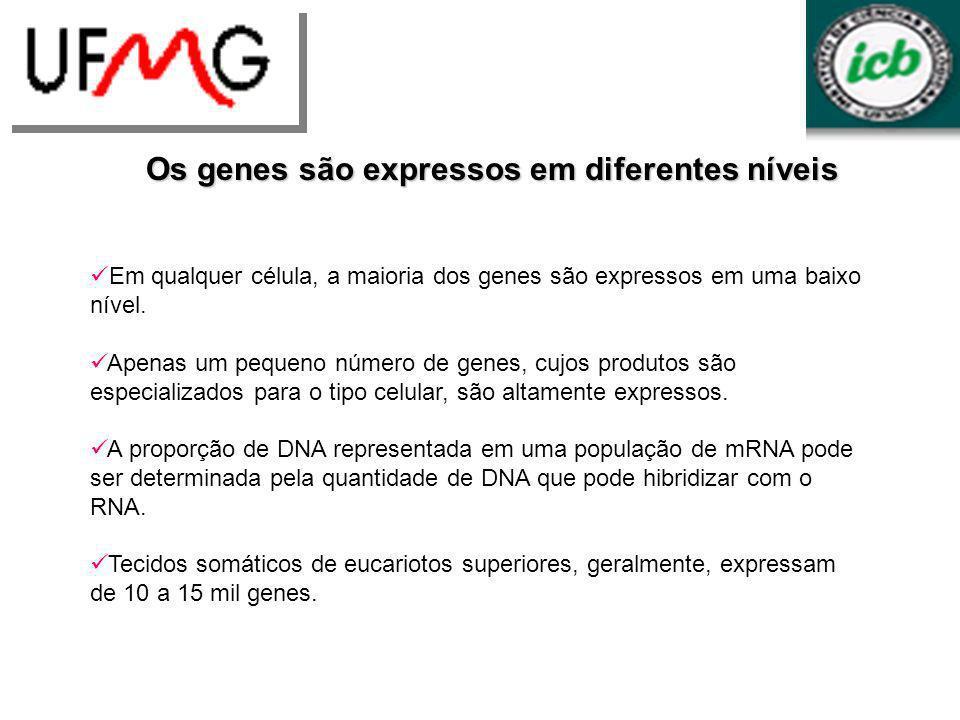 Os genes são expressos em diferentes níveis