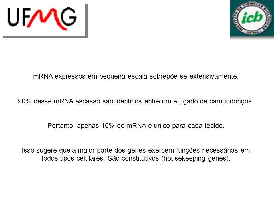mRNA expressos em pequena escala sobrepõe-se extensivamente.