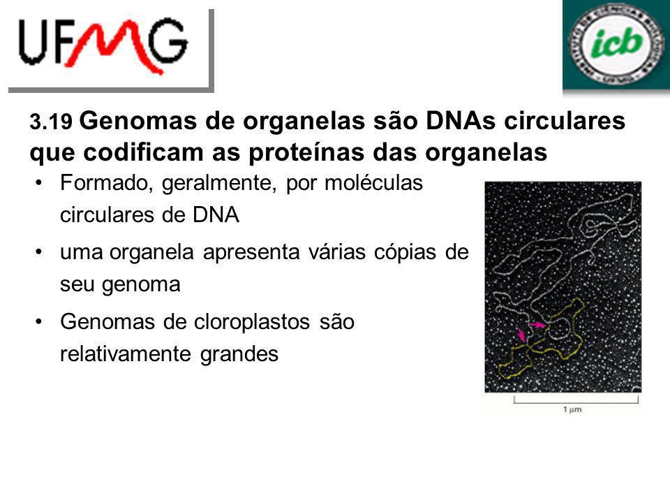 3.19 Genomas de organelas são DNAs circulares que codificam as proteínas das organelas