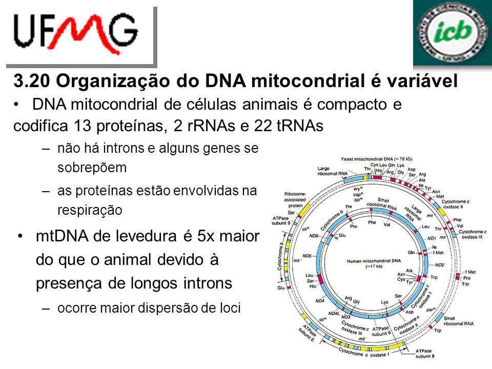 3.20 Organização do DNA mitocondrial é variável