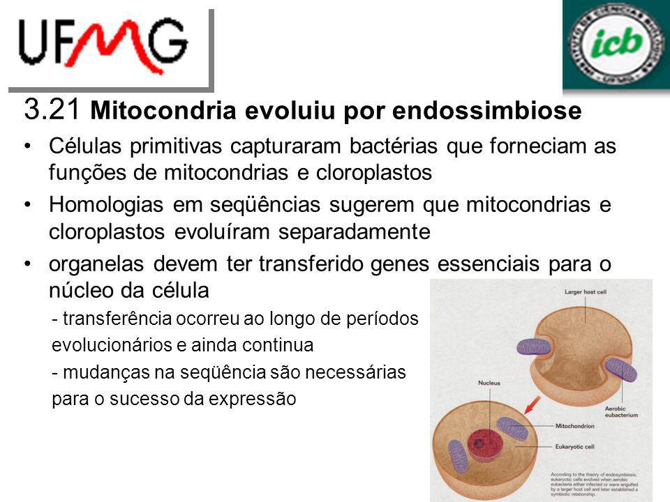 3.21 Mitocondria evoluiu por endossimbiose