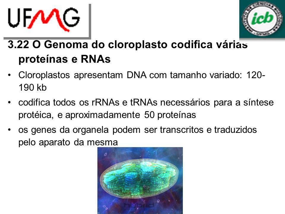 3.22 O Genoma do cloroplasto codifica várias proteínas e RNAs