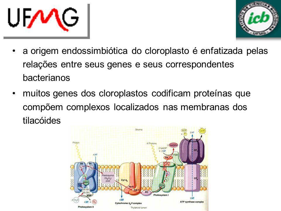 a origem endossimbiótica do cloroplasto é enfatizada pelas relações entre seus genes e seus correspondentes bacterianos