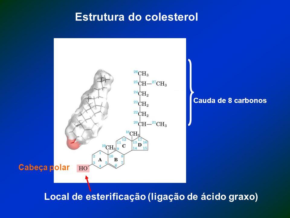 Estrutura do colesterol