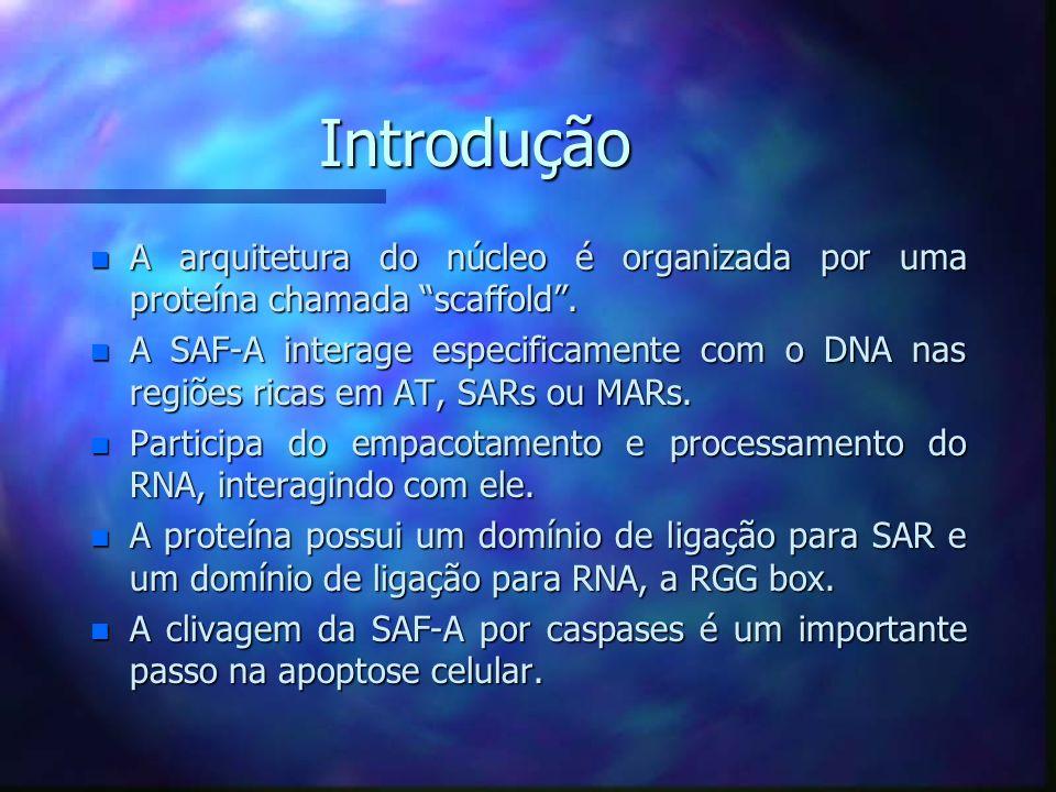 Introdução A arquitetura do núcleo é organizada por uma proteína chamada scaffold .