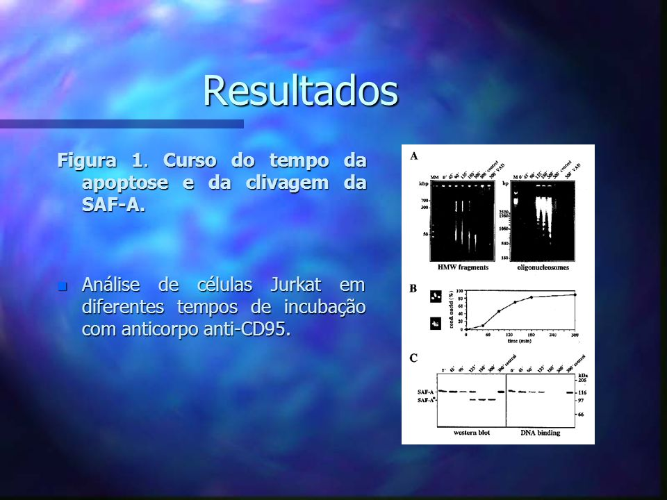 ResultadosFigura 1. Curso do tempo da apoptose e da clivagem da SAF-A.