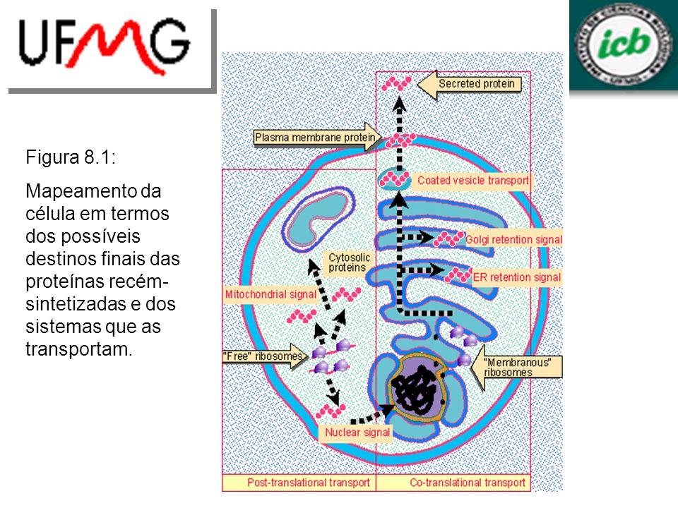 Figura 8.1: Mapeamento da célula em termos dos possíveis destinos finais das proteínas recém-sintetizadas e dos sistemas que as transportam.