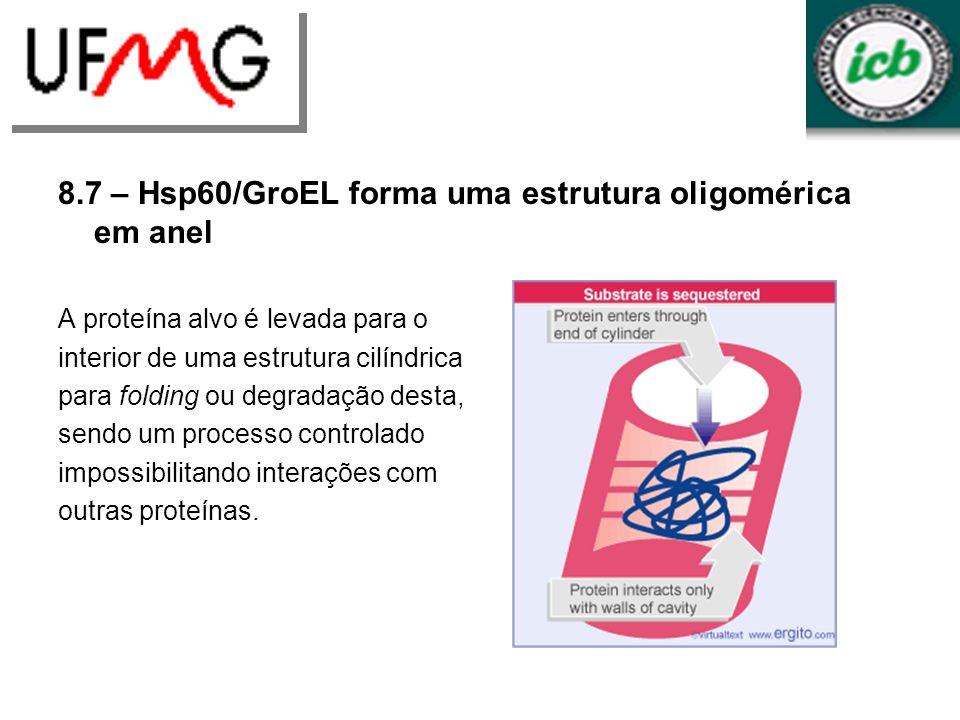 8.7 – Hsp60/GroEL forma uma estrutura oligomérica em anel