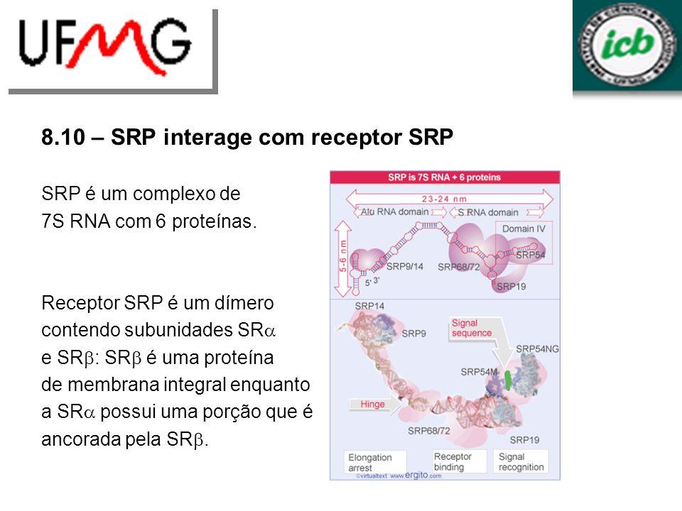 8.10 – SRP interage com receptor SRP