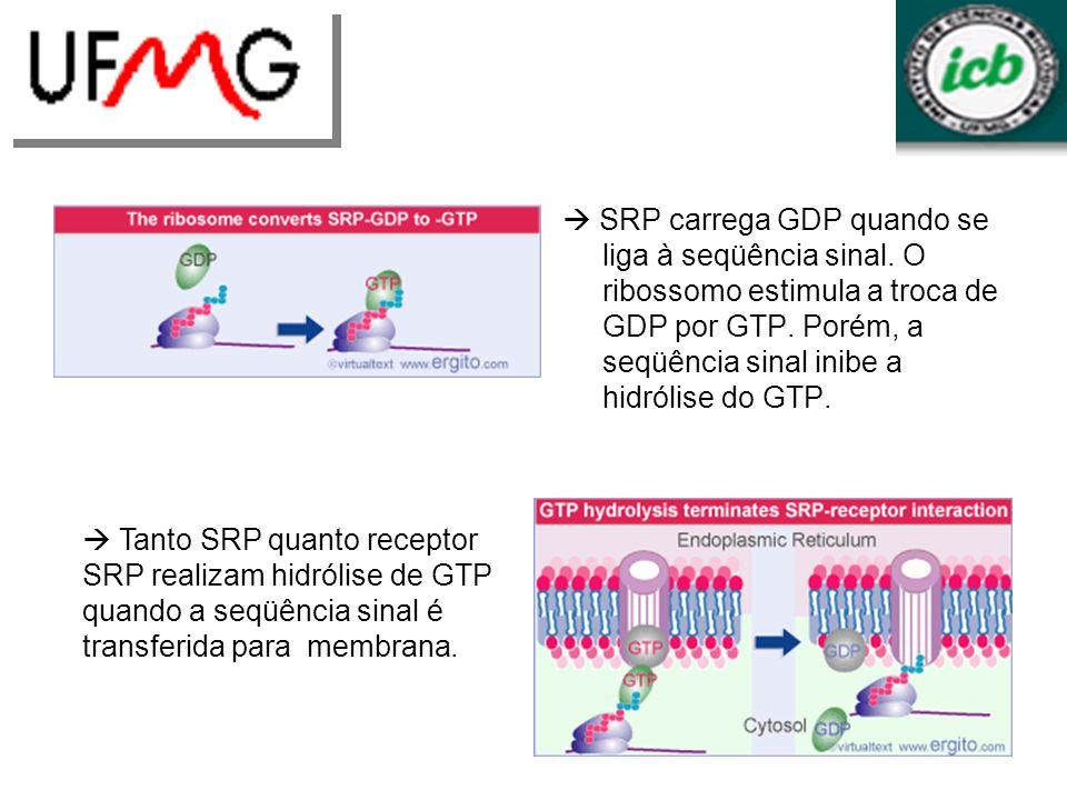  SRP carrega GDP quando se liga à seqüência sinal