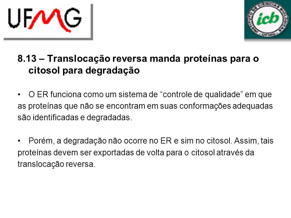 8.13 – Translocação reversa manda proteínas para o citosol para degradação