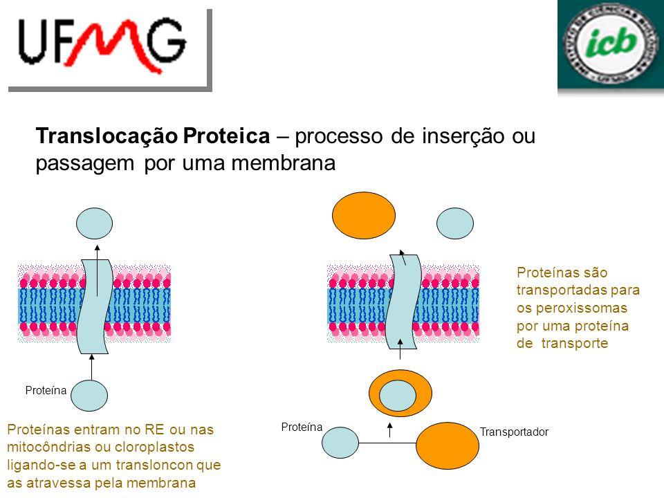 Translocação Proteica – processo de inserção ou passagem por uma membrana