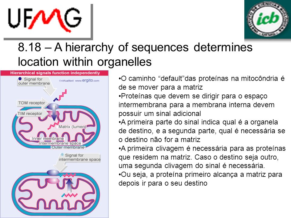 8.18 – A hierarchy of sequences determines location within organelles