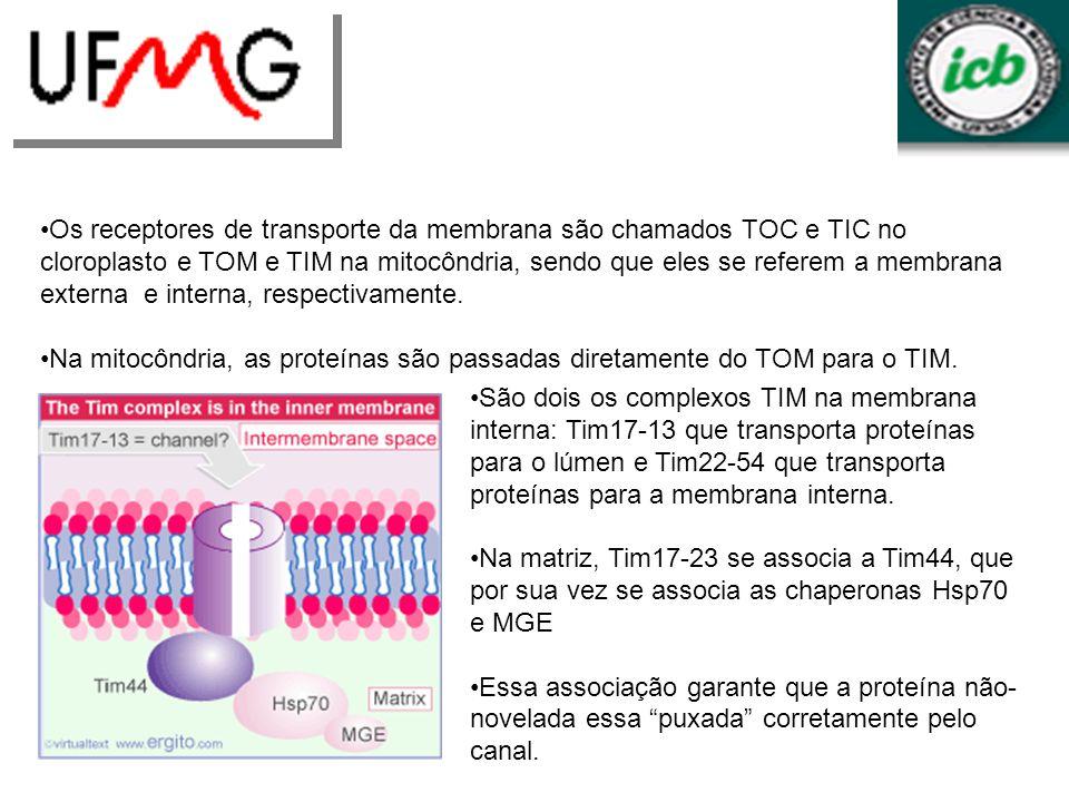 Os receptores de transporte da membrana são chamados TOC e TIC no cloroplasto e TOM e TIM na mitocôndria, sendo que eles se referem a membrana externa e interna, respectivamente.