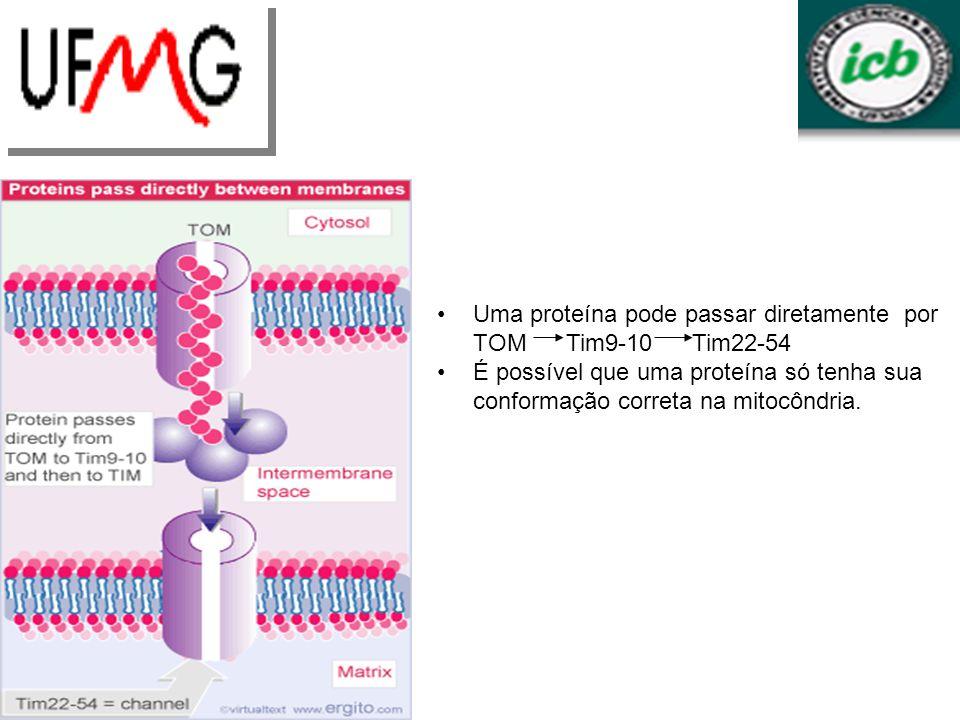 Uma proteína pode passar diretamente por TOM Tim9-10 Tim22-54