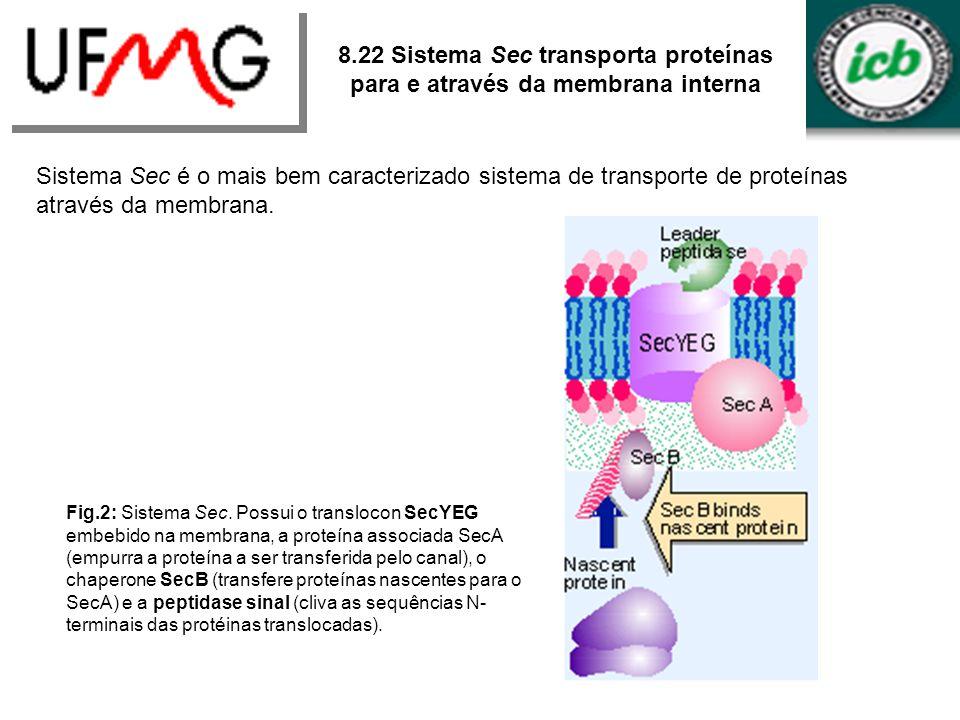 8.22 Sistema Sec transporta proteínas para e através da membrana interna