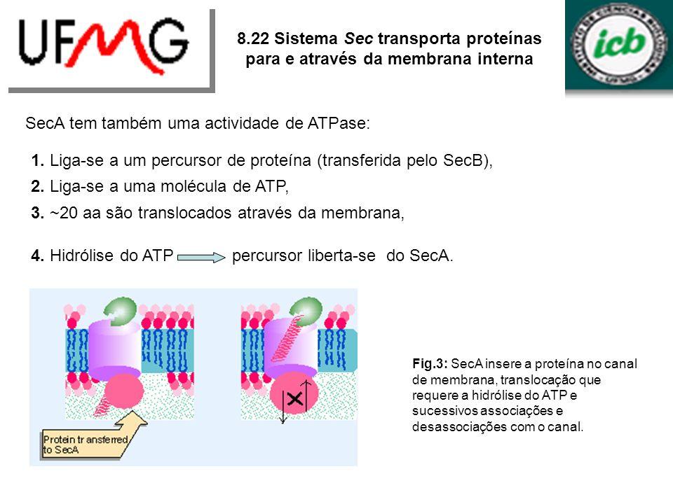 SecA tem também uma actividade de ATPase: